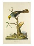 Tab LXVIII Giclee Print by John Frederick Miller