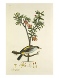 Tab LVI Premium Giclee Print by John Frederick Miller