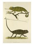 Tab XI Giclee Print by John Frederick Miller