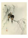 Swallows in Salix Impression giclée