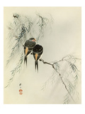 Swallows in Salix Giclee Print