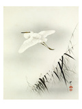Bambusa with Egret Giclee Print