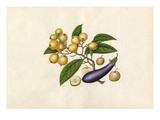 Solanum melongena, Malus prunifolia, Eriobotrya japonica Giclee Print by  Wang Lui Chi