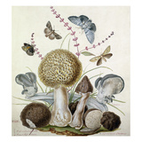 Plate XLIX Giclee Print by Thomas the Elder Robins