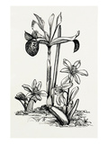 Iris histrio and Scilla mischtschenkoana Giclee Print by Graham Stuart Thomas