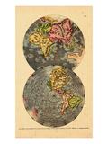 1690, World Giclee Print