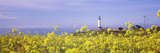 Lighthouse on the Coast, Pigeon Point Lighthouse, San Mateo County, California, USA Photographic Print by  Panoramic Images