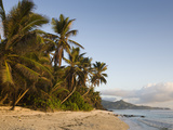 Palm Trees on the Beach, Anse Marie-Louise Beach, Mahe Island, Seychelles Photographic Print by Green Light Collection