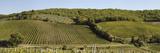 Vineyard, Chianti Region, Radda in Chianti, Siena Province, Tuscany, Italy Photographic Print by  Panoramic Images