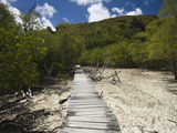 Boardwalk Passing Through a Marsh, Curieuse Island, Seychelles Photographic Print by Green Light Collection
