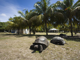 Aldabra Giant Tortoise (Aldabrachelys Elephantina) in a Botanical Garden, Curieuse Island, Seych... Photographic Print by Green Light Collection