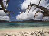 Shadow of Bare Trees on the Beach, Anse St. Jose Bay, Curieuse Island, Seychelles Photographic Print by  Green Light Collection