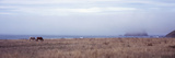 Horses Grazing in a Field, California State Route 211, Ferndale, Humboldt County, California, USA Photographic Print by  Panoramic Images