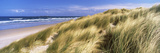 Tall Grass on the Beach, Bamburgh, Northumberland, England Photographic Print by  Panoramic Images