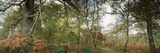 Ancient Woodland in a Forest, Sherwood Forest, Nottinghamshire, England Photographic Print by  Panoramic Images