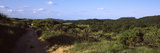 Dirt Road Passing Through a Landscape, Maputaland Coastal Forest Mosaic, South Africa Photographic Print by  Panoramic Images