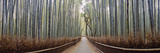 Bamboo Trees in a Forest, Arashiyama, Kyoto Prefecture, Japan Photographic Print by  Panoramic Images