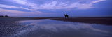 Silhouette of a Horse with Rider on the Beach at Dawn, Camber Sands, Camber, East Sussex, England Photographic Print by  Panoramic Images