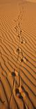 Animal Tracks on Sand Dune, Namibia Reprodukcja zdjęcia autor Panoramic Images