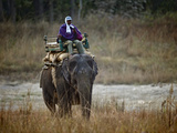 Man Riding an Indian Elephant (Elephas Maximus Indicus), Bandhavgarh National Park, Madhya Prade... Photographic Print by Green Light Collection