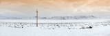Telephone Pole in Snow, Nevada, USA Photographic Print by  Panoramic Images