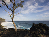 Tree on the Beach, Le Souffleur D'Arbonne, Le Baril, Reunion Island Photographic Print by Green Light Collection