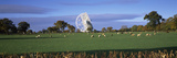 Radio Telescope and Sheep in a Field, Jodrell Bank Observatory, Jodrell Bank, Macclesfield, Ches... Reproduction photographique par  Panoramic Images