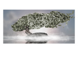 Close-Up of a Money Tree Photographic Print by  Panoramic Images
