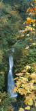 Waterfall in a Forest, Shepperds Dell Falls, Columbia River Gorge, Multnomah County, Oregon, USA Photographic Print by  Panoramic Images