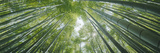 Low Angle View of Bamboo Trees, Hokokuji Temple, Kamakura, Kanagawa Prefecture, Kanto Region, Ho... Reproduction photographique par  Panoramic Images