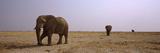 Three African Elephants (Loxodonta Africana) Bulls Approaching a Waterhole, Etosha National Park... Photographic Print by  Panoramic Images
