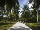 Palm Trees in a Park, Anse Source D'Argent, L'Union Estate Plantation, La Digue Island, Seychelles Fotoprint van Green Light Collection,