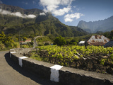 Vineyard at the Roadside, Ilet a Cordes, Cirque De Cilaos, Reunion Island Photographic Print by  Green Light Collection