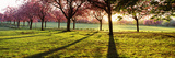 Cherry Blossom in a Park at Dawn, Stray, Harrogate, North Yorkshire, England Photographic Print by  Panoramic Images