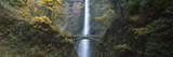 Waterfall in a Forest, Multnomah Falls, Columbia River Gorge, Multnomah County, Oregon, USA Photographic Print by  Panoramic Images