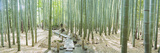 Bamboo Trees at a Temple, Hokokuji Temple, Kamakura, Kanagawa Prefecture, Kanto Region, Honshu, ... Photographic Print by Panoramic Images