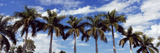 Low Angle View of Palm Trees, Florida, USA Photographic Print by  Panoramic Images