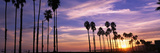 Silhouette of Palm Trees at Sunset, Santa Barbara, California, USA Photographic Print by  Panoramic Images