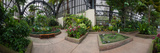 Plants in a Botanical Garden, Balboa Park, San Diego, California, USA Photographic Print by  Panoramic Images
