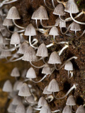 Close-Up of Mushrooms, Madagascar Photographic Print