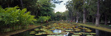 Lily Pads in a Pond, Sir Seewoosagur Ramgoolam Botanical Garden, Mauritius Photographic Print by  Panoramic Images