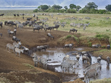 Zebras and Wildebeest at a Waterhole, Tanzania Fotografisk tryk