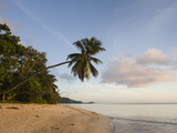 Palm Trees on the Beach, Fairyland Beach, Mahe Island, Seychelles Photographic Print by Green Light Collection