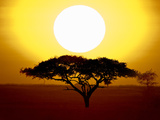 Silhouette of a Tree at Sunrise, Tanzania Fotodruck