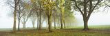 Trees in a Park During Fog, Wandsworth Park, Putney, London, England Photographic Print by  Panoramic Images