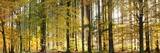 Trees in Autumn, Hohenlohe, Baden-Wurttemberg, Germany Photographic Print by  Panoramic Images