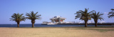Trees on the Beach, the Pier, St. Petersburg, Florida, USA Photographic Print by  Panoramic Images