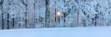 Forest in Winter at Sunrise, Swabian Alb, Baden-Wurttemberg, Germany Photographic Print by  Panoramic Images