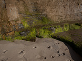Moss on Cliffs, San Diego, California, USA Photographic Print