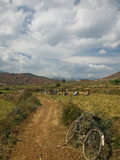 Farmers Working in Agricultural Fields, Jangwei, Erhai Hu Lake Area, Yunnan Province, China Photographic Print